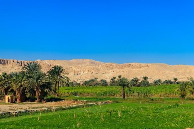 ナイル川の肥沃な銀行。ナイル川の谷。エジプトのナイル川沿いのヤシの木と畑
