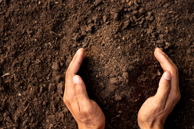 Fertile loam is suitable for planting trees.