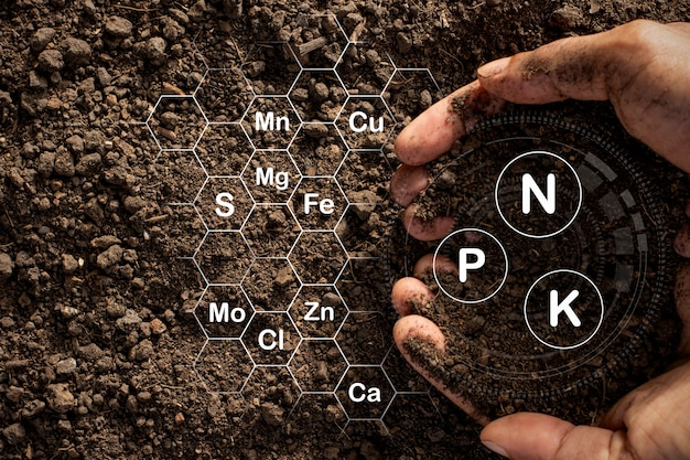 Плодородная суглинистая почва, пригодная для посадки