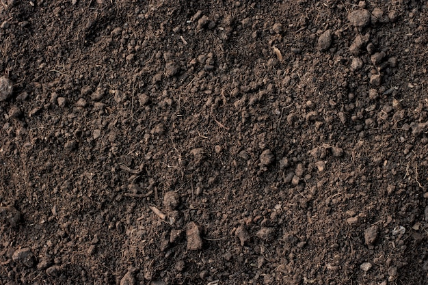 Fertile loam soil suitable for planting.