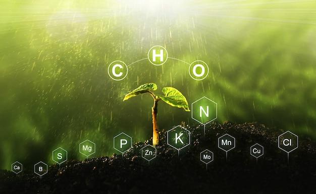 受精とデジタルミネラル栄養素による植物生活における栄養素の役割