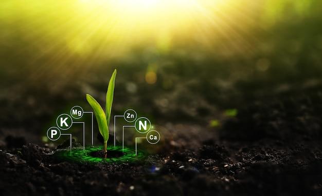 Удобрение и роль питательных веществ в жизни растений с помощью цифровых минеральных питательных веществ