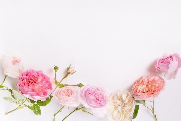 흰색 바탕에 축제 꽃 영어 장미 구성입니다. 오버 헤드 평면도, 평면도. 공간을 복사합니다. 생일, 어머니, 발렌타인, 여성, 결혼식 날 컨셉입니다.