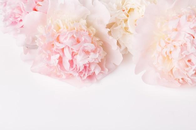 흰색 바탕에 축제 꽃 분홍색 모란 구성입니다. 오버 헤드 평면도, 평면 누워. 공간을 복사합니다. 생일, 어머니, 발렌타인, 여성, 결혼식 날 컨셉입니다.