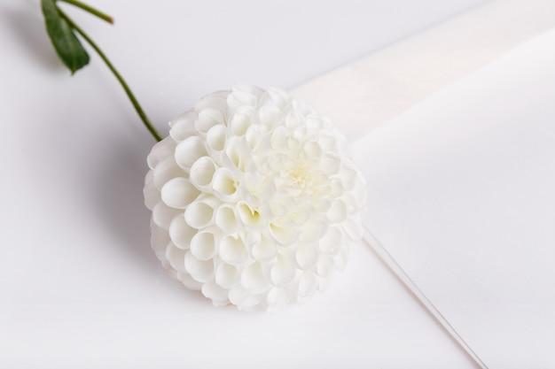 축제 꽃 흰색 달리아와 봉투, 편지, 흰색 배경에 축하 구성. 오버 헤드 평면도, 평면 누워. 공간을 복사합니다. 생일, 어머니, 발렌타인, 여성, 결혼식 날 개념