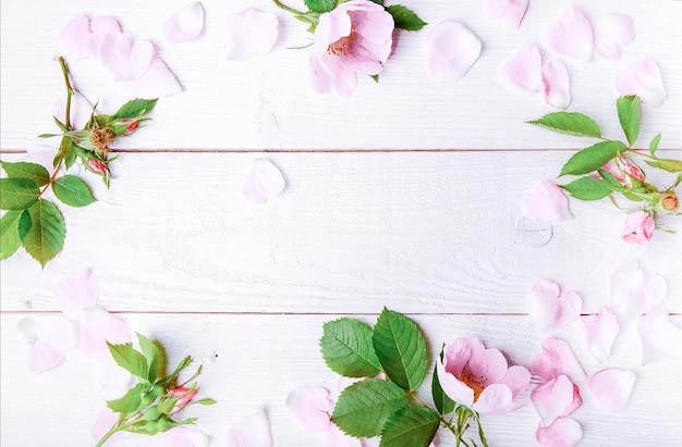 흰색 바탕에 축제 꽃 야생 핑크 장미 구성. 오버 헤드 평면도, 평면 누워. 공간을 복사합니다. 생일, 어머니, 발렌타인, 여성, 결혼식 날 컨셉입니다.
