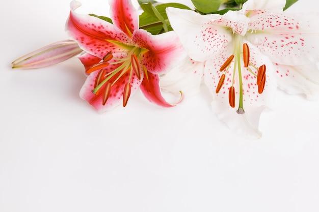축제 꽃 흰색 배경에 빨간색과 흰색 백합 꽃 구성. 오버 헤드 평면도, 평면 누워. 공간을 복사합니다. 생일, 어머니, 발렌타인, 여성, 결혼식 날 개념