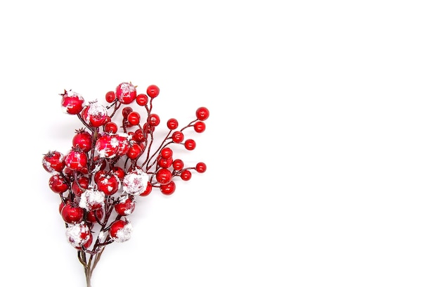 Festive new year or christmas background with red holly plant berries.