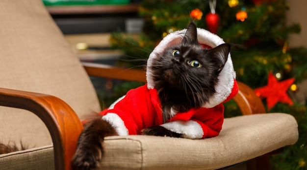 Festive portrait of black cat in santa claus costume on armchair against background of christmas tree