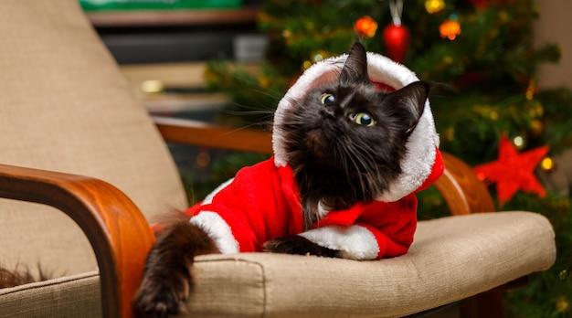 クリスマスツリーの背景に肘掛け椅子にサンタクロースの衣装で黒猫のお祝いの肖像画