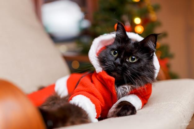 クリスマスツリーと肘掛け椅子にサンタクロースの衣装で黒猫のお祝いの肖像画