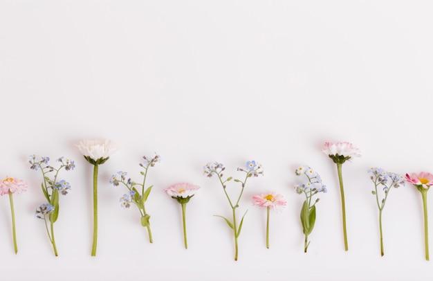 축제 야생 봄 여름 꽃, 데이지, 흰색 배경에 물망초 구성. 오버 헤드 평면도, 평면 누워. 공간을 복사합니다. 생일, 어머니, 발렌타인, 여성, 결혼식 날 컨셉입니다.