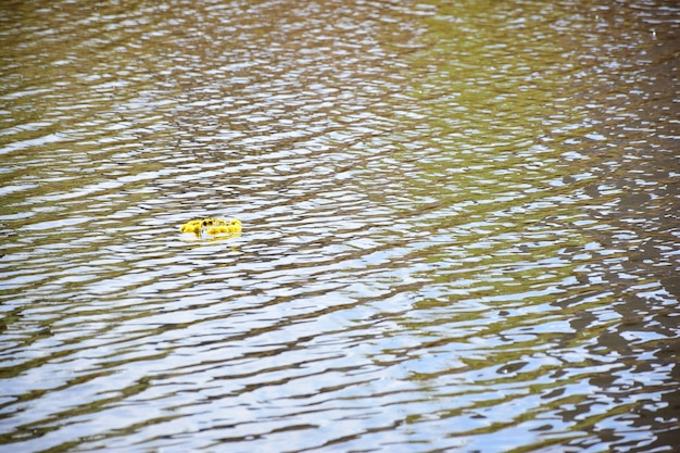 A festive yellow flower wreath floats on the surface of a lake or river to the left