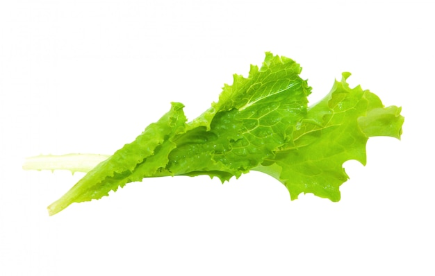 A few fresh leaves of lettuce isolated on a white background