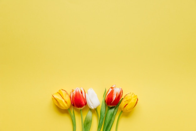 Few fresh tulips on yellow