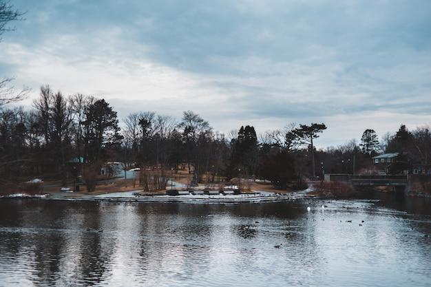 Несколько домов у озера в окружении высоких и зеленых деревьев