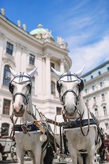 Традиционный конный тренер fiaker в вене, австрия