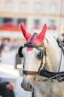 ウィーンオーストリアの伝統的な馬コーチfiaker
