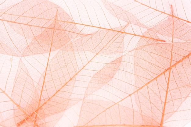 白い繊維の乾燥した葉
