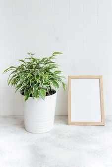 Ficus benjamin  and mock up poster frame on the table