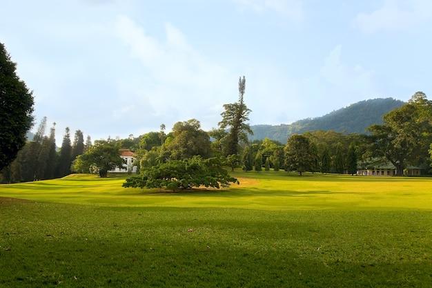 王立植物園のイチジクベンジャミナ