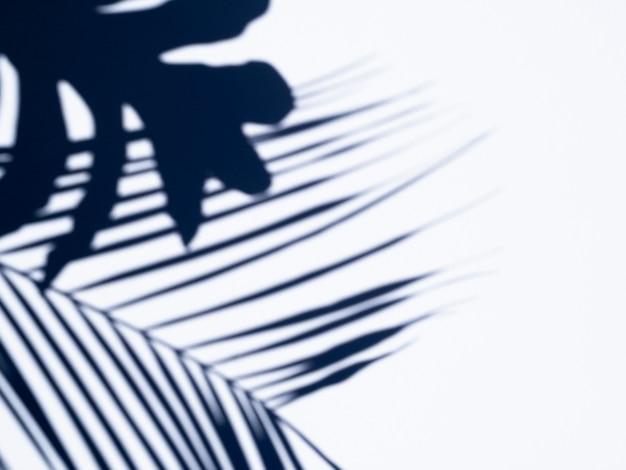 イチジクは白い背景に影を残します