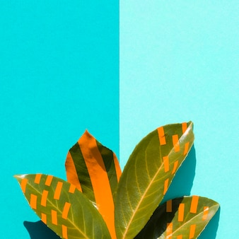 Ficus leaves with gradient blue copy space background