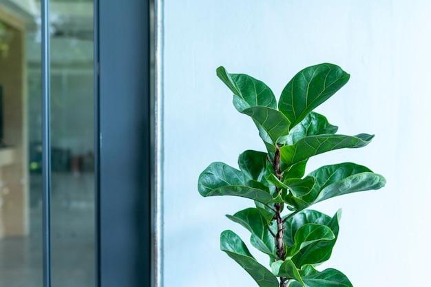 モダンなスタイルの部屋の前にある装飾用木材のフィカスリラタ Premium写真