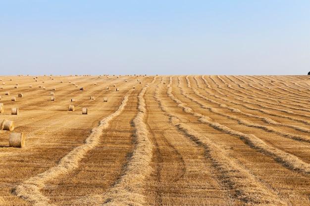 수확 후 들판