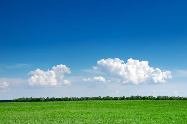 フィールドと青い空