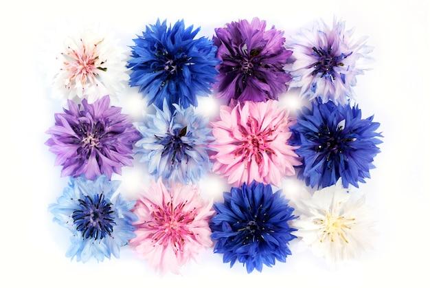 Полевые и луговые цветы васильки разных цветов