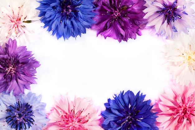 野原と牧草地の花ヤグルマギク異なる色