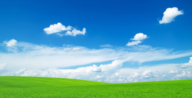 Field background with blue sky