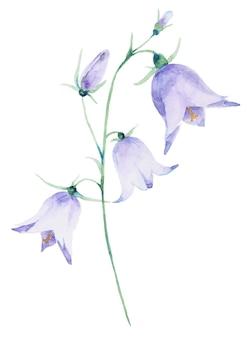 白い背景で隔離の手描き水彩画のフィールドベル花。手描きの植物ハーブワイルドフラワー。