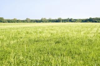 Field  clear