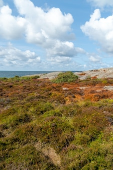 Campo coperto di erba e rocce circondato da un fiume sotto la luce del sole durante il giorno