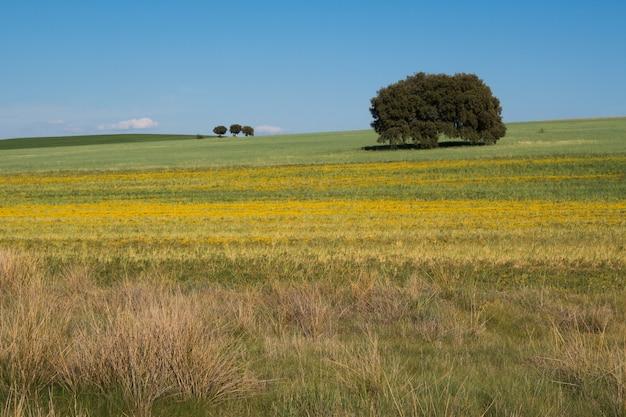 Campo coperto di verde sotto la luce del sole e un cielo blu