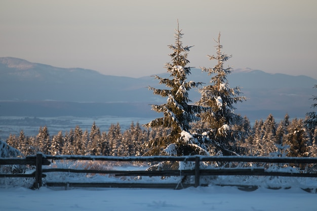 Поле, покрытое вечнозелеными растениями и снегом, с горами под солнечным светом