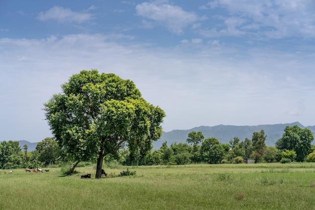 青い曇り空と日光の下で緑に覆われたフィールド