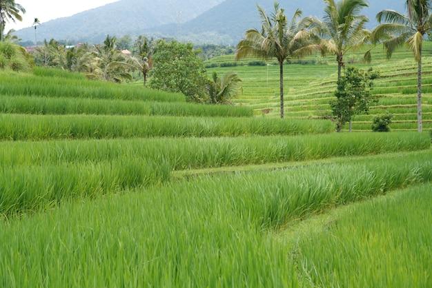 昼間の日光の下で丘に囲まれた草やヤシの木に覆われた畑