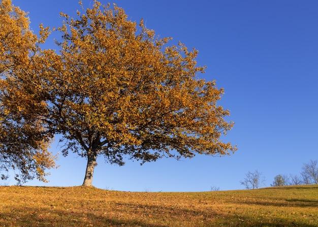 秋の青空と陽光の下で木々に覆われた野原と枯葉