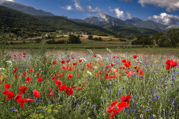 Field covered in red poppies surrounded by mountains under the sunlight