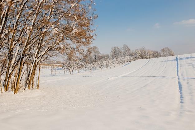 Campo coperto di neve e alberi sotto la luce del sole e un cielo nuvoloso in inverno