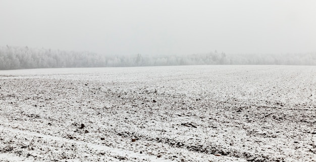 Field covered with white snow