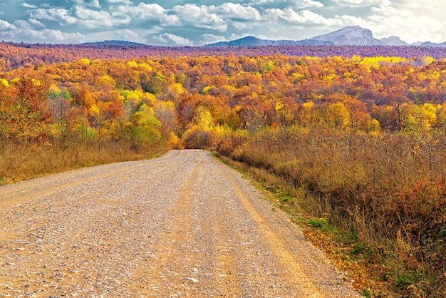 A field dirt road that goes into a dense forest in october during the day