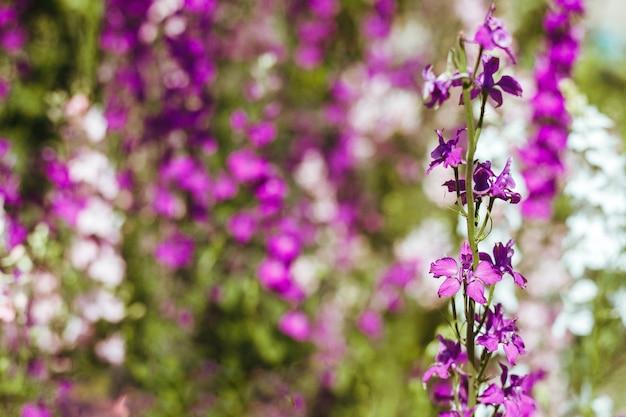野の花。背景の美しいぼかし。マルチカラーの花。
