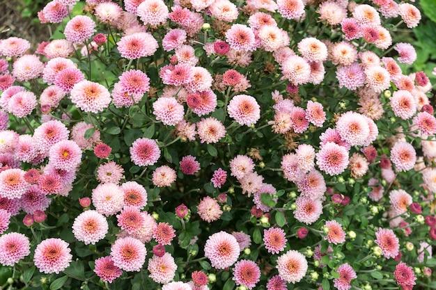 필드 꽃 dobrogea 카운티, 루마니아에서 촬영. 봄날