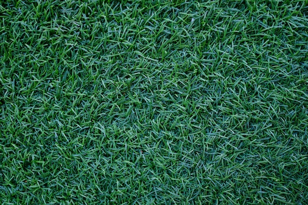 Field of fresh green  lawn grass texture natural background .
