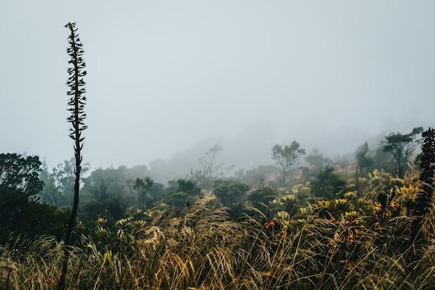 Поле, полное разных полевых цветов и туманное небо
