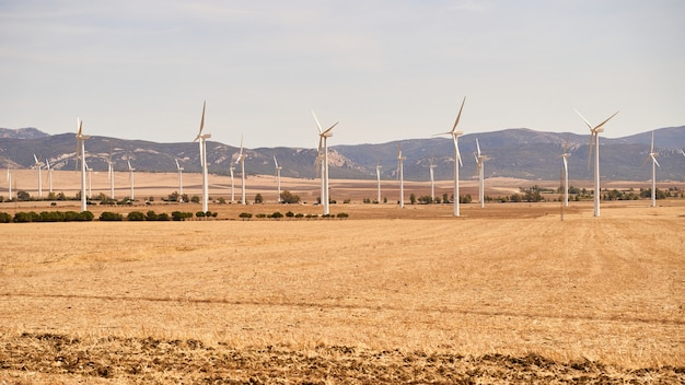 Field full of wind turbines producing electricity. concept of renewable energies. cadiz, spain.